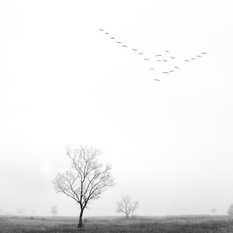 Paysage noir et blanc avec arbre et oiseaux
