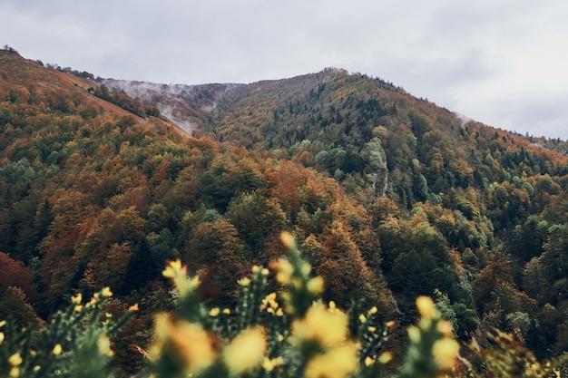 Paysage avec des nuages entre les montagnes. forêt d'irati en automne
