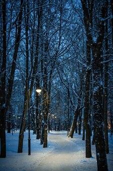 Paysage de nuit d'hiver - banc sous les arbres d'hiver et réverbères brillants avec des flocons de neige tombant