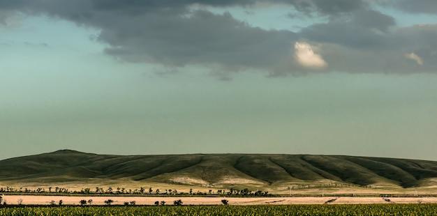 Paysage panoramique minimaliste. un long champ de tournesols au pied d'une colline verdoyante divisée par des ceintures forestières