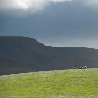 Paysage, pâturage et montagne sous un ciel d'orage, avec des moutons