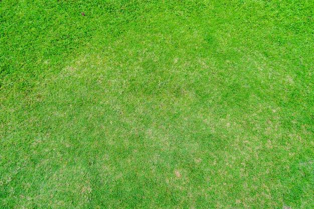 Paysage de pelouse et parc public vert