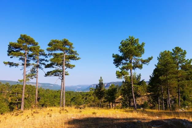 Paysage avec des pins