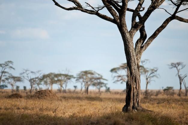 Paysage de la plaine du serengeti, tanzanie, afrique