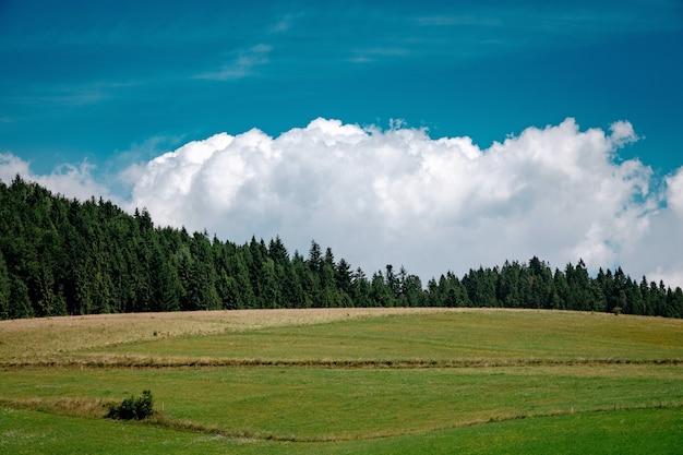 Paysage de prairie avec ciel bleu