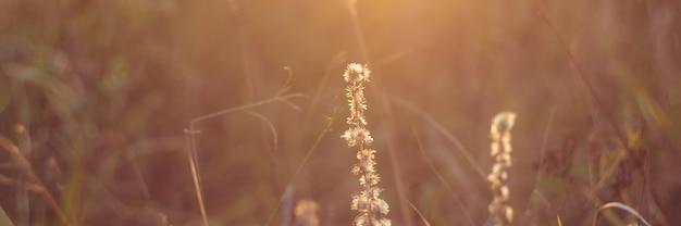 Paysage de prairie avec des herbes, des prés d'automne tonifiant vintage