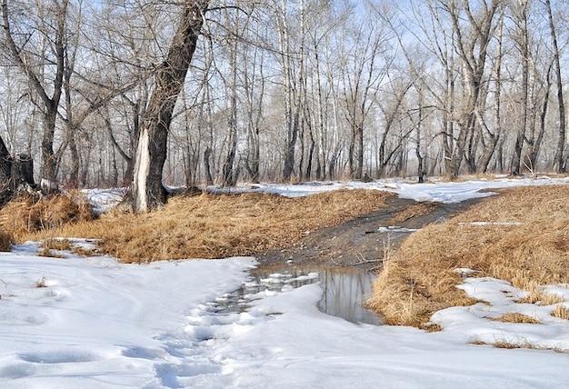 Paysage printemps arbres forestiers neige flaques d'eau