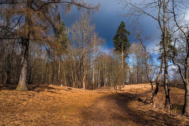Paysage de printemps au parc en avril.