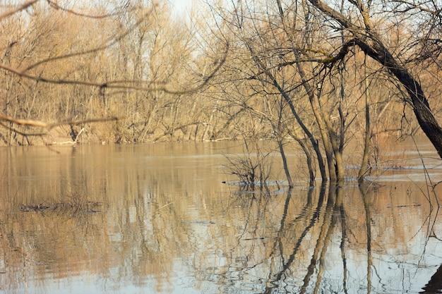 Paysage de printemps avec des bouleaux et de l'eau de fonte sur le lac ou la rivière.