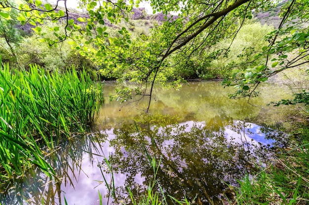 Paysage de printemps dans la forêt avec petite rivière reflétant les branches des arbres. duratãƒâ³n, ségovie.