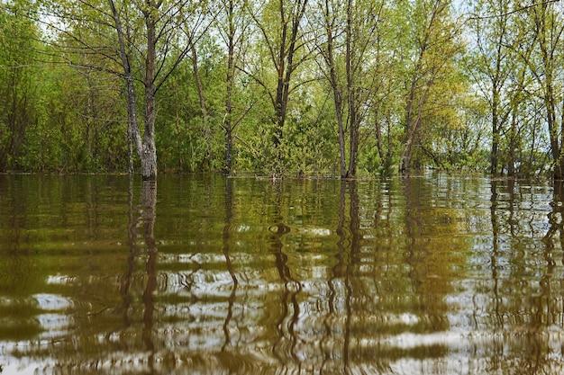 Paysage de printemps pendant l'inondation - le bosquet est inondé, les arbres se tiennent dans l'eau