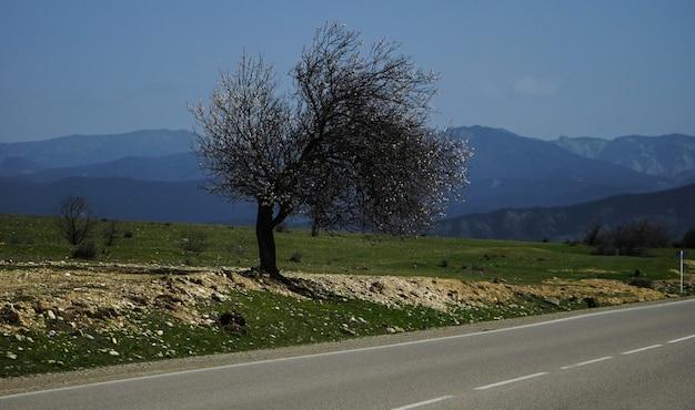Paysage de printemps avec seul arbre sur une route