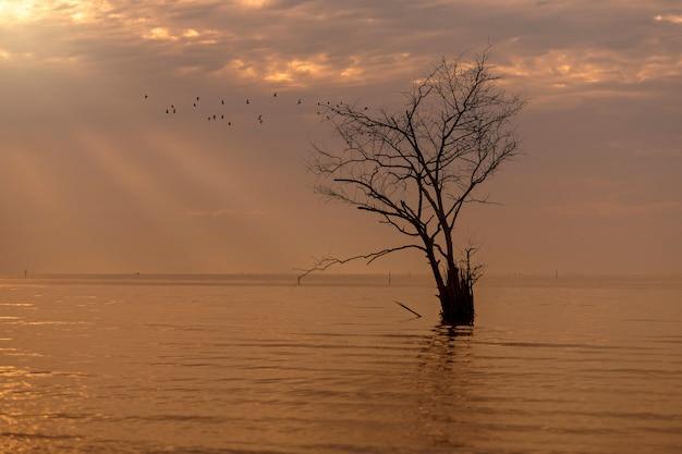 Paysage avec la réflexion de l'arbre unique silhouette au coucher du soleil.