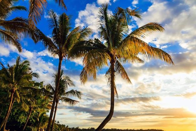 Paysage relaxant - coucher de soleil tropical