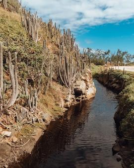 Paysage d'une rivière à rio de janeiro avec une route de sable et des cactus sur une colline