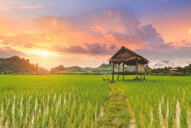 Paysage de rizière avec ciel chaud au lever du soleil.