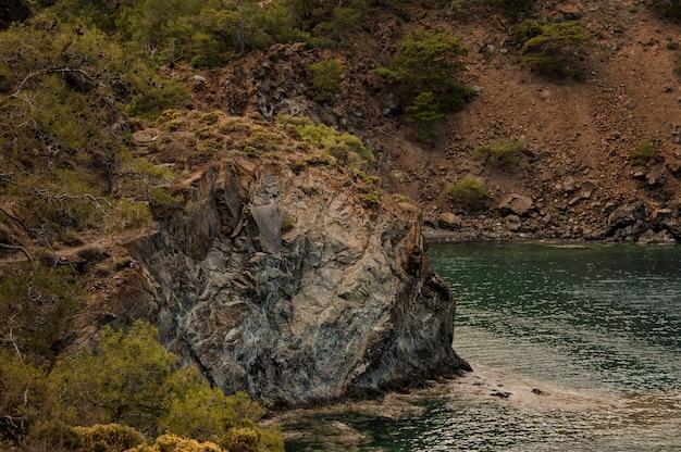 Paysage de la roche brune couvrant par les arbres