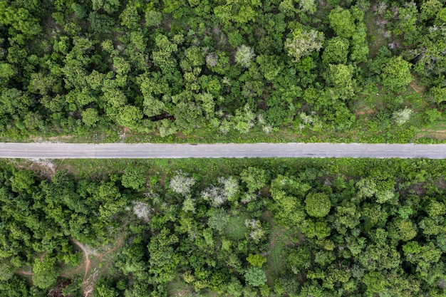 Paysage de route asphaltée droite dans la forêt tropicale