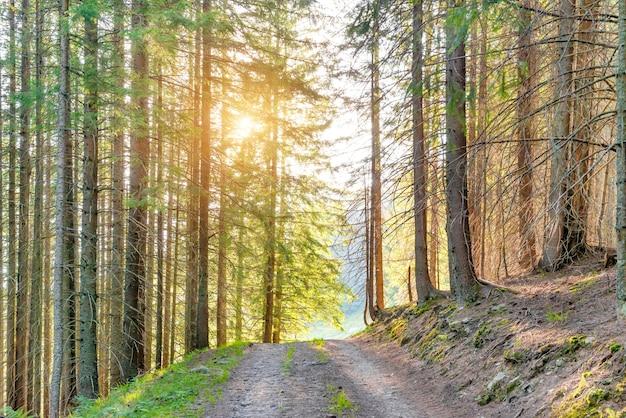 Paysage avec route dans la forêt verte et rayons de soleil