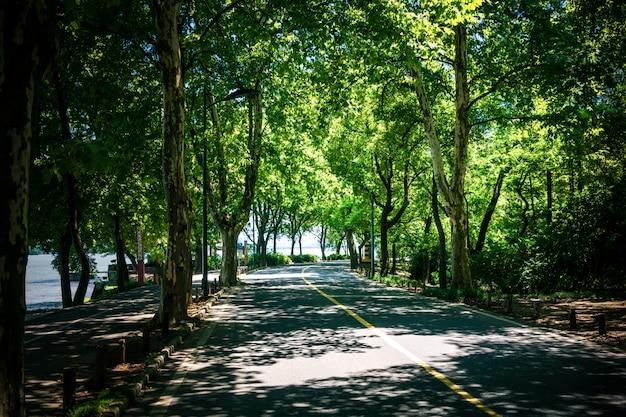 Paysage de route droite sous les arbres, le célèbre tunnel vert de longtien à taitung, à taiwan.