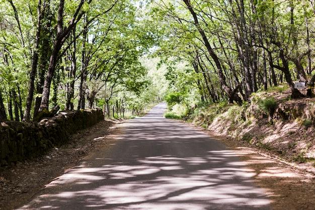 Paysage de route droite sous les arbres. temps ensoleillé. personne. concept de voyage