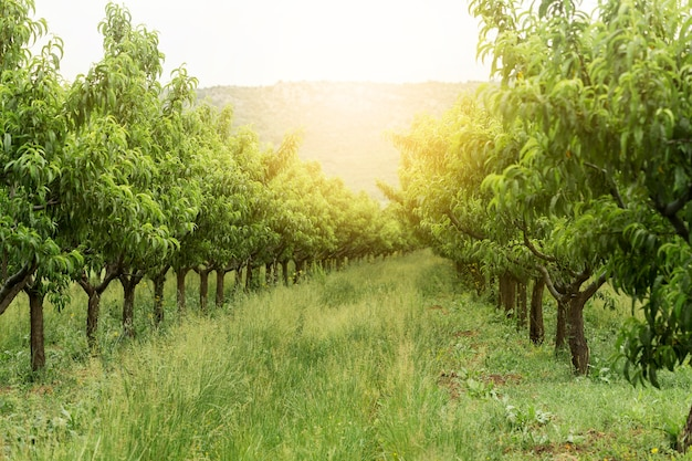 Paysage rural avec des arbres