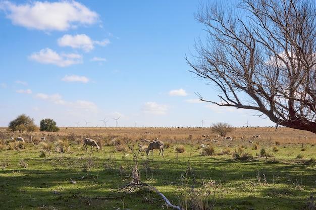 Paysage rural : champ avec moutons, pâturage, ciel bleu avec quelques nuages et moulins générateurs en arrière-plan