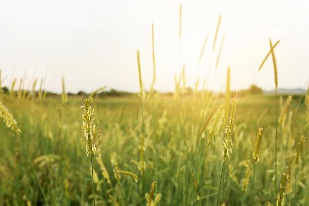 Paysage rural avec de l'herbe