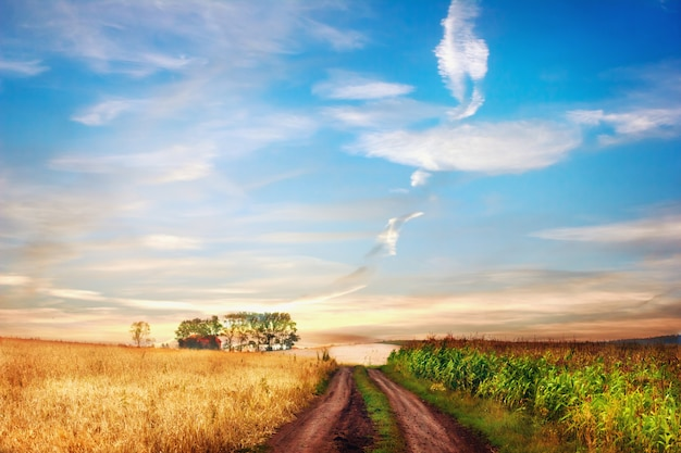 Paysage rural idyllique avec une route entre deux champs.
