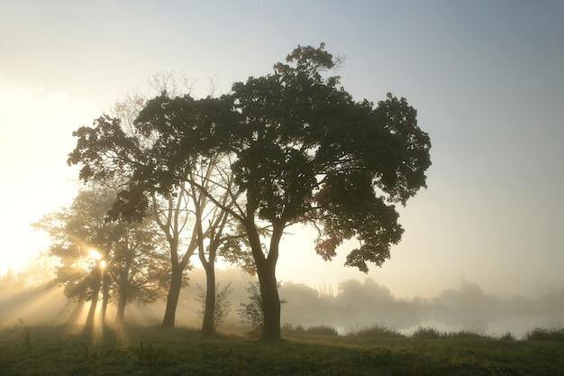 Paysage rural un matin d'automne