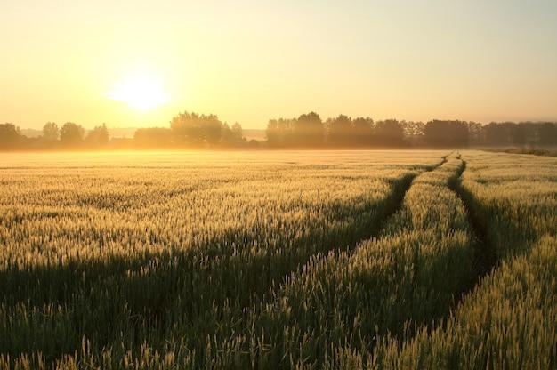 Paysage rural sur un matin d'été brumeux