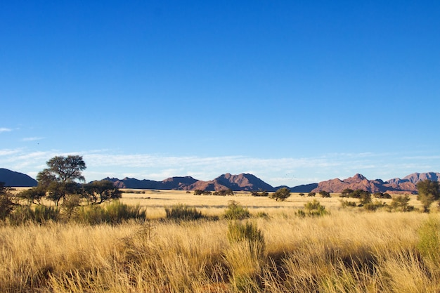 Paysage de savane africaine, namibie, afrique du sud