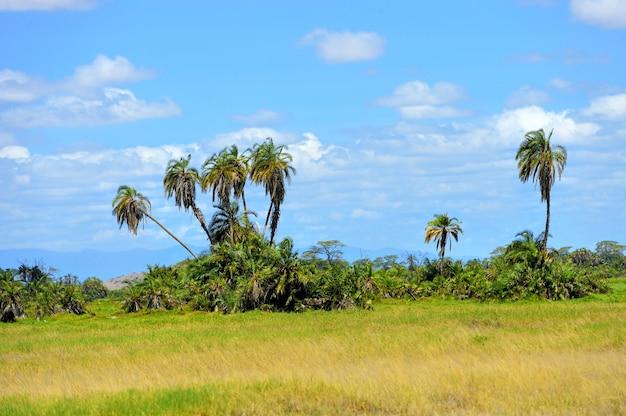 Paysage de savane dans le parc national du kenya
