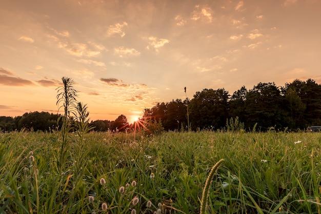 Paysage de soirée d'été avec champ d'herbe verte ciel horizon forêt nuages soleil au coucher du soleil avec poutres n...