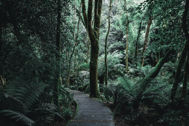 Paysage sombre d'un sentier forestier avec des planches en bois