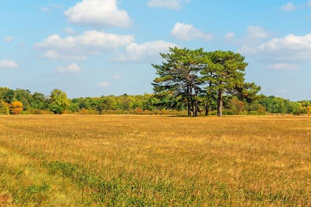 Paysage de steppe d'automne avec des arbres, réserve de biosphère askania-nova