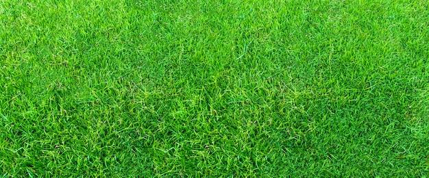 Paysage de terrain en herbe dans un parc public vert, utilisé comme fond naturel. texture de l'herbe verte d'un champ.