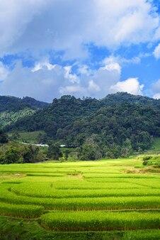 Paysage terrasse vert rizière au lever du soleil