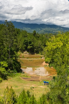 Paysage de toraja et de l'agriculture sulawesi, indonésie