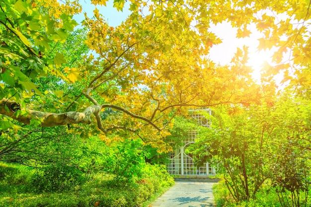 Paysage tranquille paysage vert matin