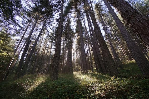 Paysage typique de la forêt et de la nature dans le parc national de sila en calabre, italie