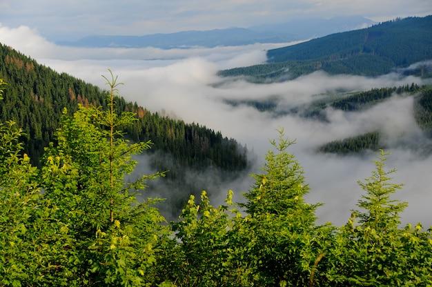 Paysage de vallée de montagne