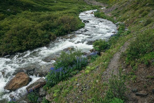 Paysage verdoyant avec des fleurs violettes de pied d'alouette et de la flore sauvage près de la rivière de montagne claire. paysages magnifiques avec l'eau transparente du ruisseau de montagne. vue panoramique sur la petite rivière à la végétation sauvage.