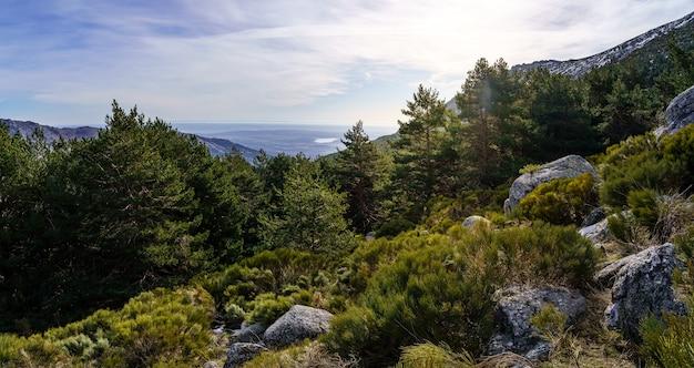 Paysage verdoyant panoramique avec des plantes vertes, des rochers et un ciel bleu avec des reflets de soleil.