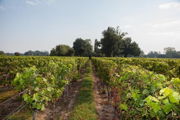 Paysage de vignes à l'automne