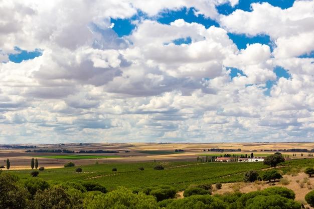 Paysage avec vignes et ciel nuageux. raisins pour faire du vin.