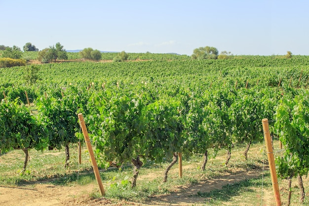 Paysage de vignoble en espagne catalogne.