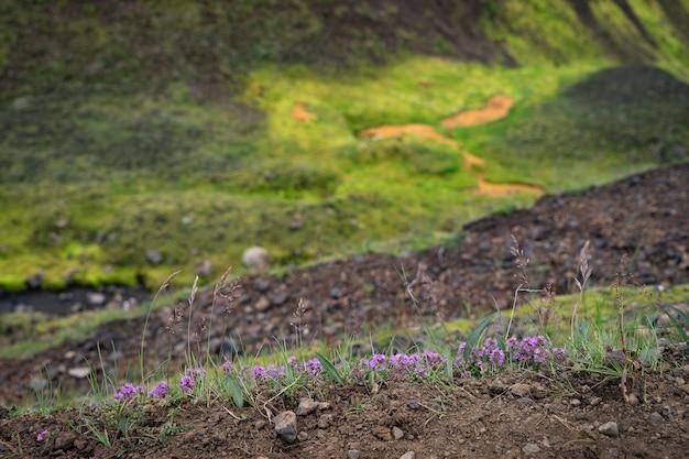 Paysage volcanique flou et avec de l'herbe et des fleurs au premier plan. islande.