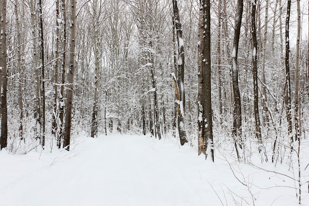Paysage avec vue sur la forêt d'hiver enneigée