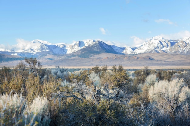 Paysages américains- prairie le long des montagnes de la sierra nevada, californie, usa.